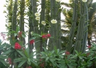cactusflorido